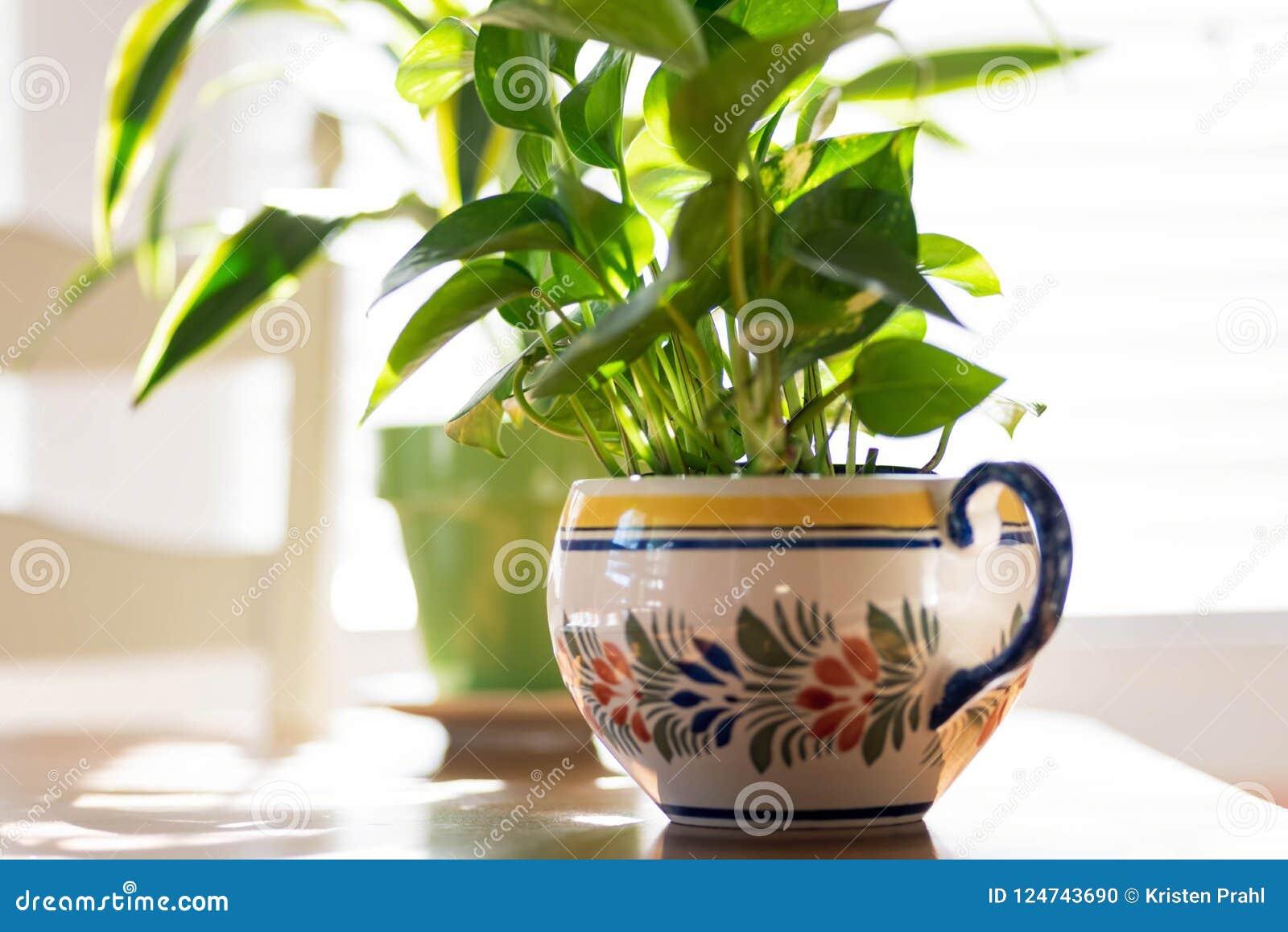 Piante In Vaso Alla Luce Solare Sul Tavolo Da Cucina Fotografia ...
