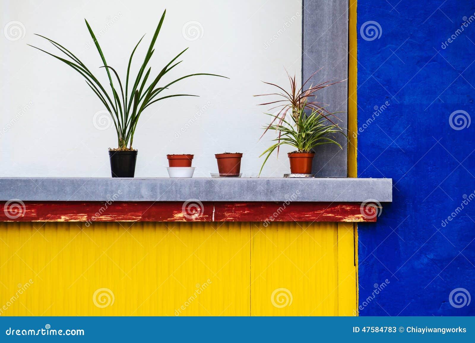 Piante In Vaso Con Le Pareti Colorate Fotografia Stock - Immagine: 47584783