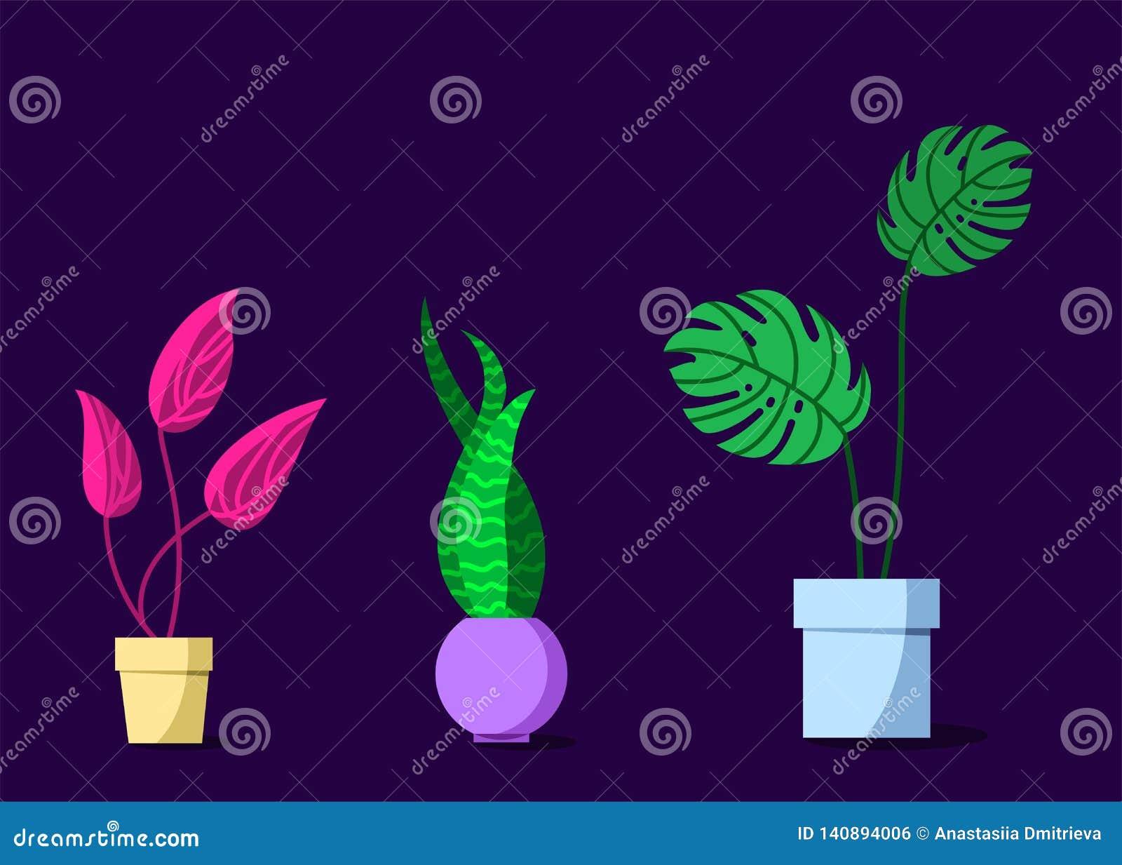 Piante in vaso messe