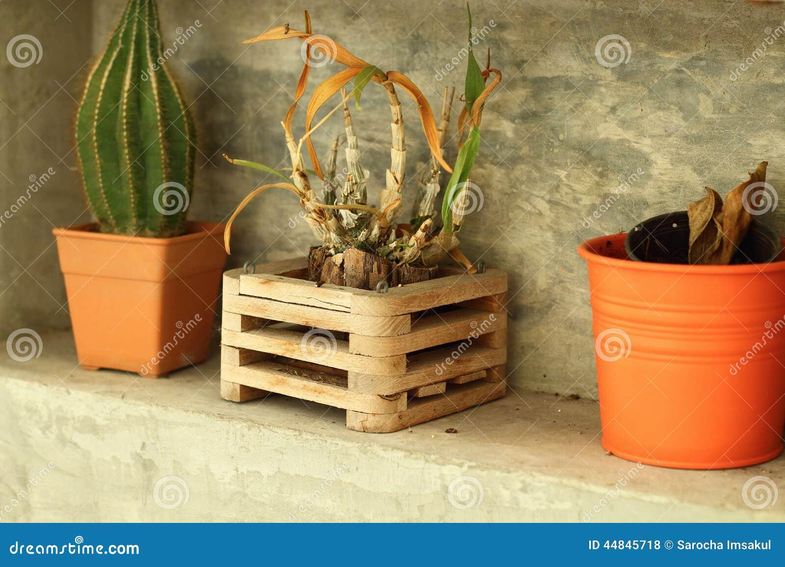 Piante in vaso per stile moderno della decorazione for Stile moderno della prateria