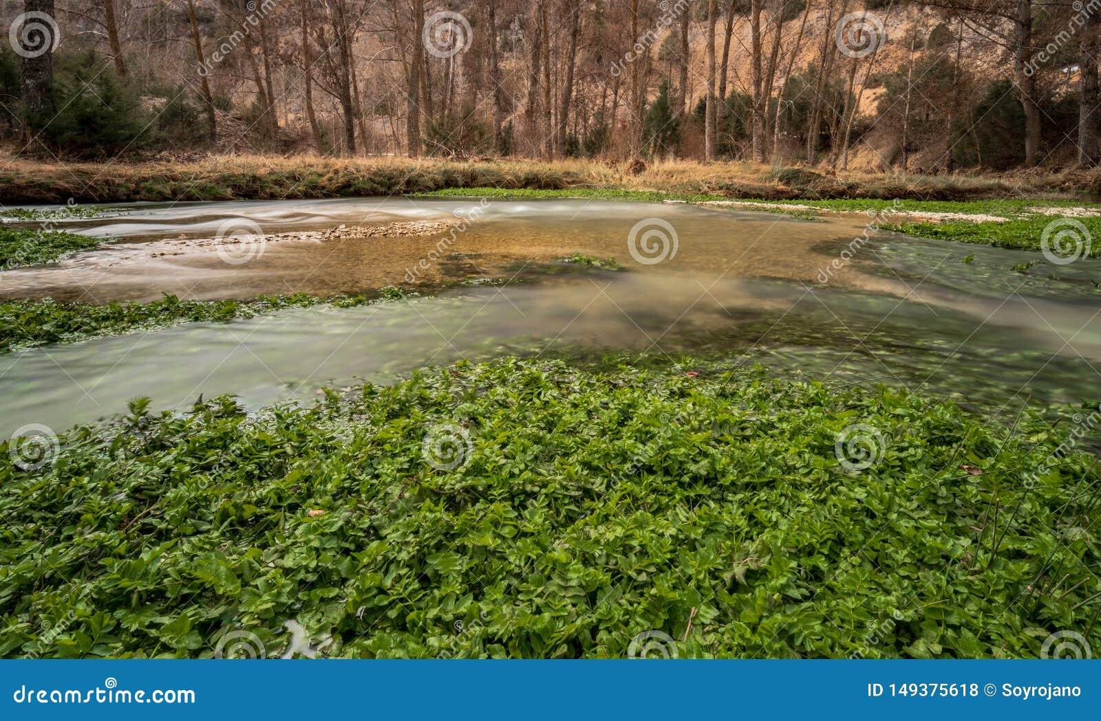 Piante verdi del fiume