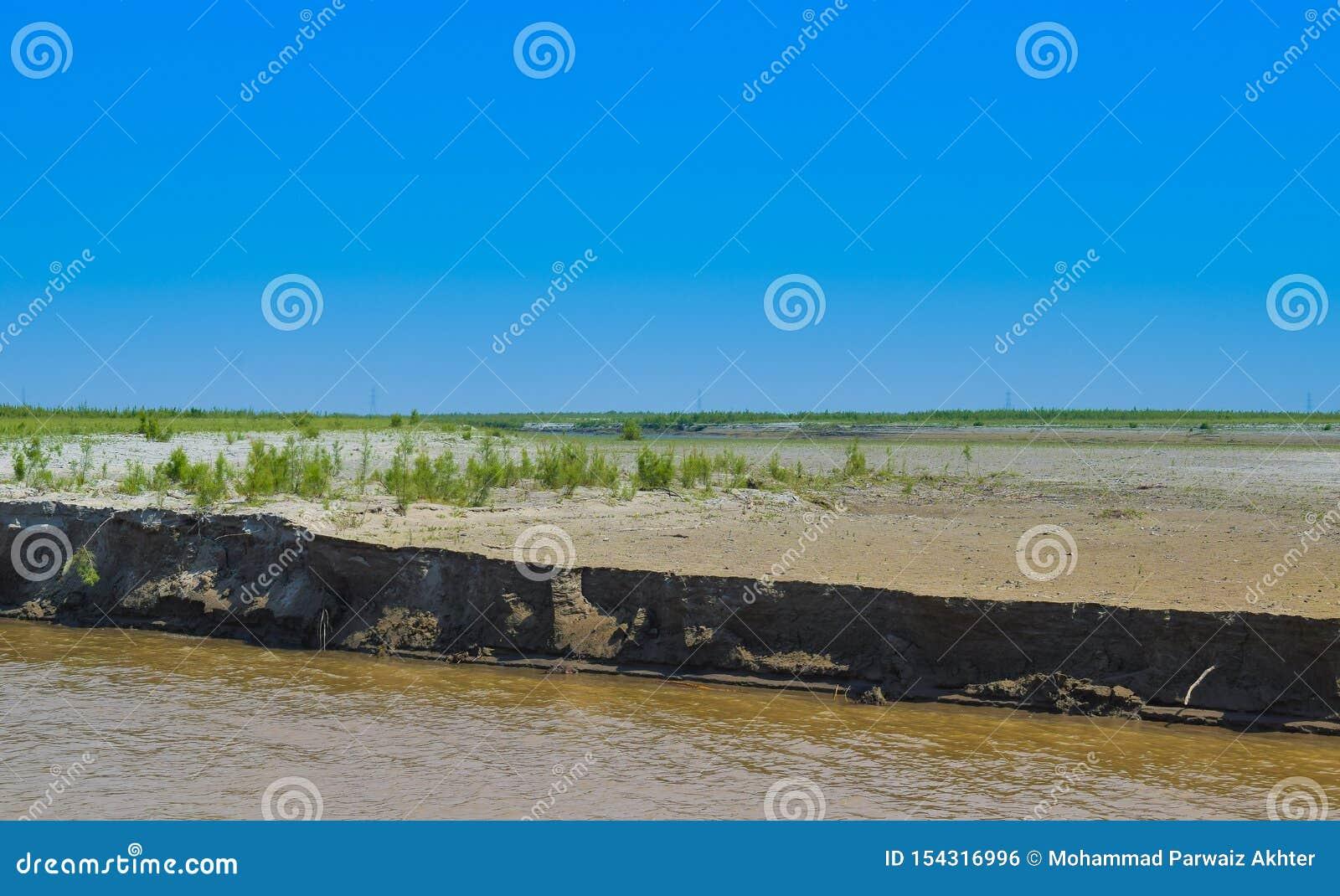 Piante verdi sulla banca del fiume indus
