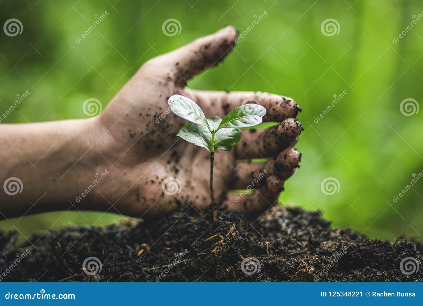 Pianti un albero che innaffia nella piantatura della mano della natura