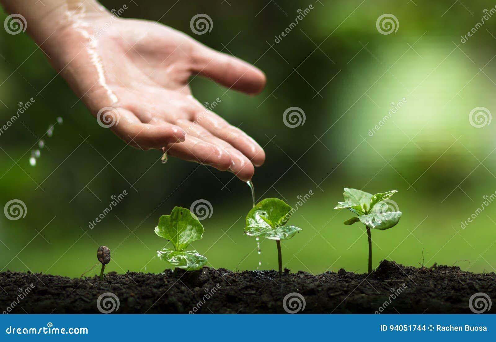 Pianti un albero, coltivi le piante del caffè, la freschezza, mani che proteggono gli alberi, innaffiare, crescente, verde,