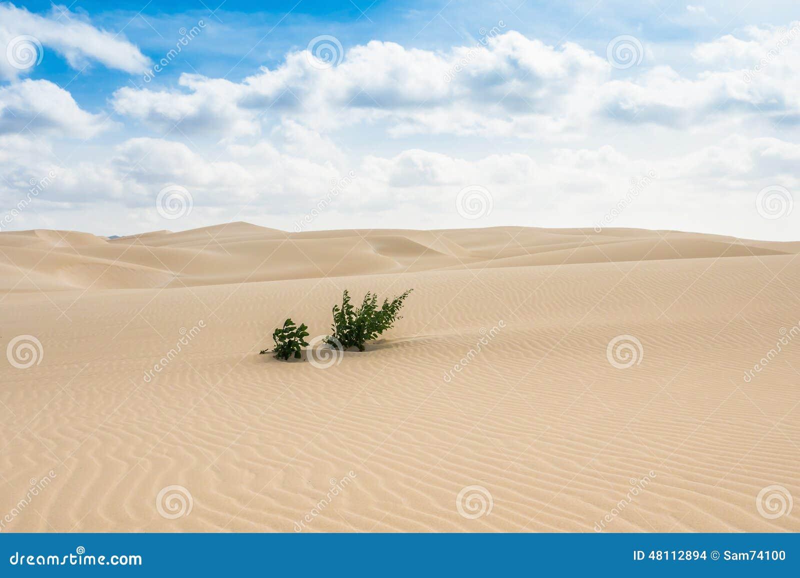 Piasek diuny w Viana pustyni przylądek - Deserto de Viana w Boavista -