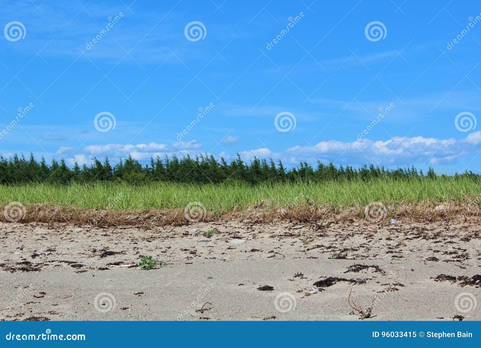 Piaskowata linia brzegowa na przylądek Bretońskiej wyspie z plażową trawą i sosnami w tle