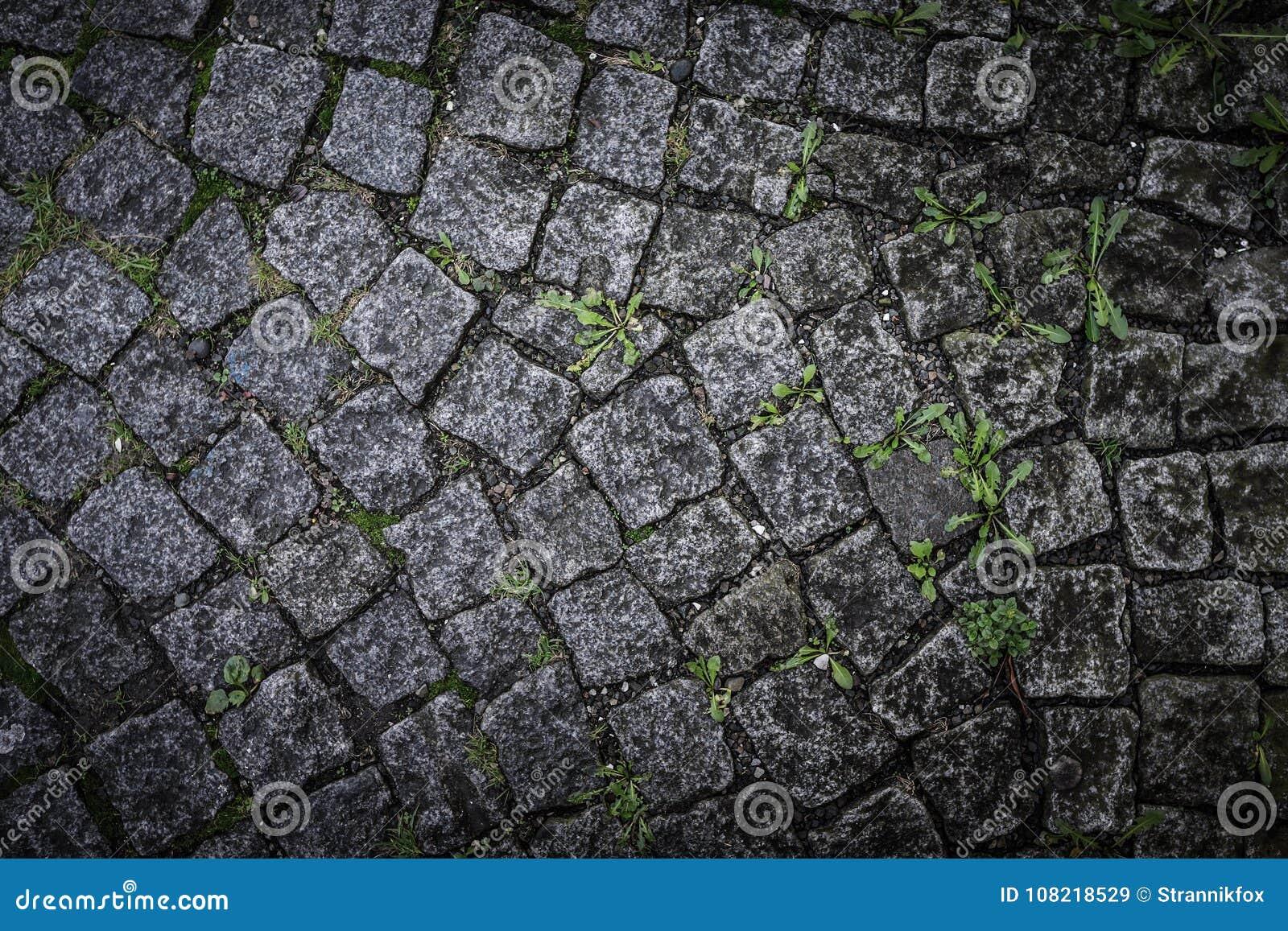Piastrella per pavimento di pietra grigia con nuova erba per fondo