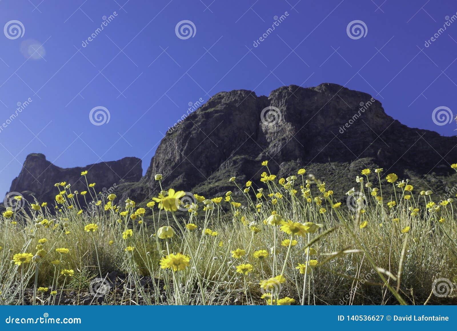 Picacho-Spitze mit Wildflowers