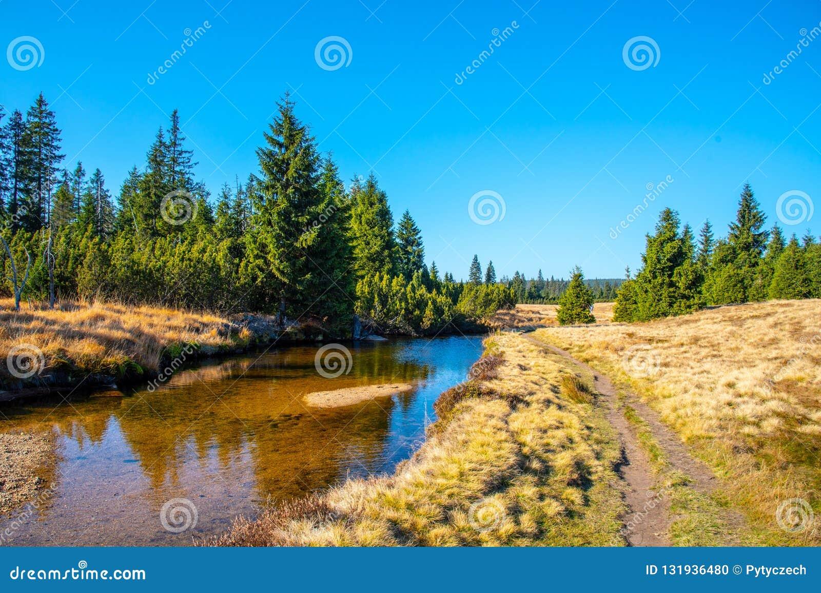 Piccola insenatura della montagna che serpeggia verso la metà dei prati e del giorno soleggiato della foresta con cielo blu e le
