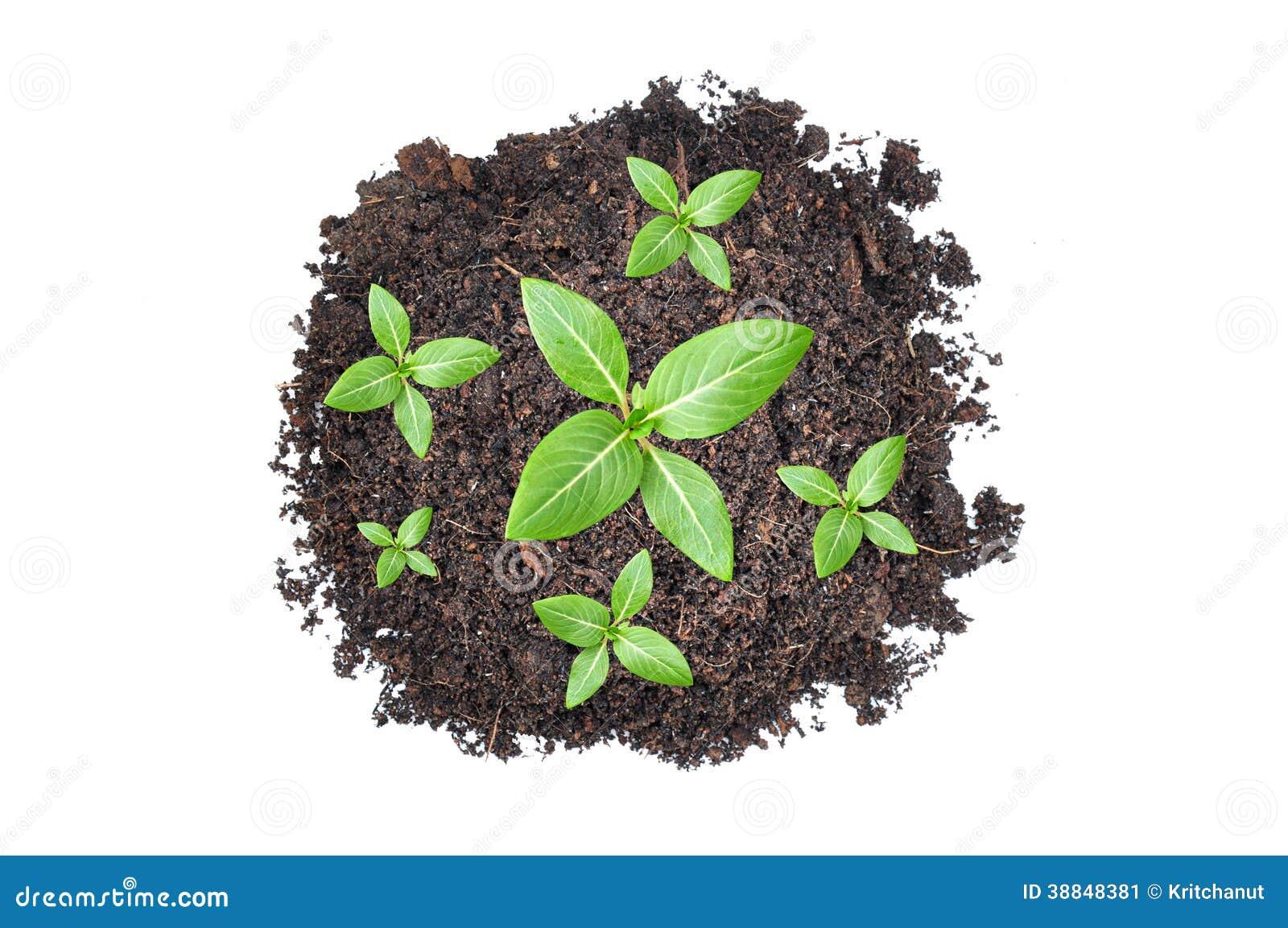 Piccole piantine verdi che crescono dal mucchio di suolo for Piccole piantine