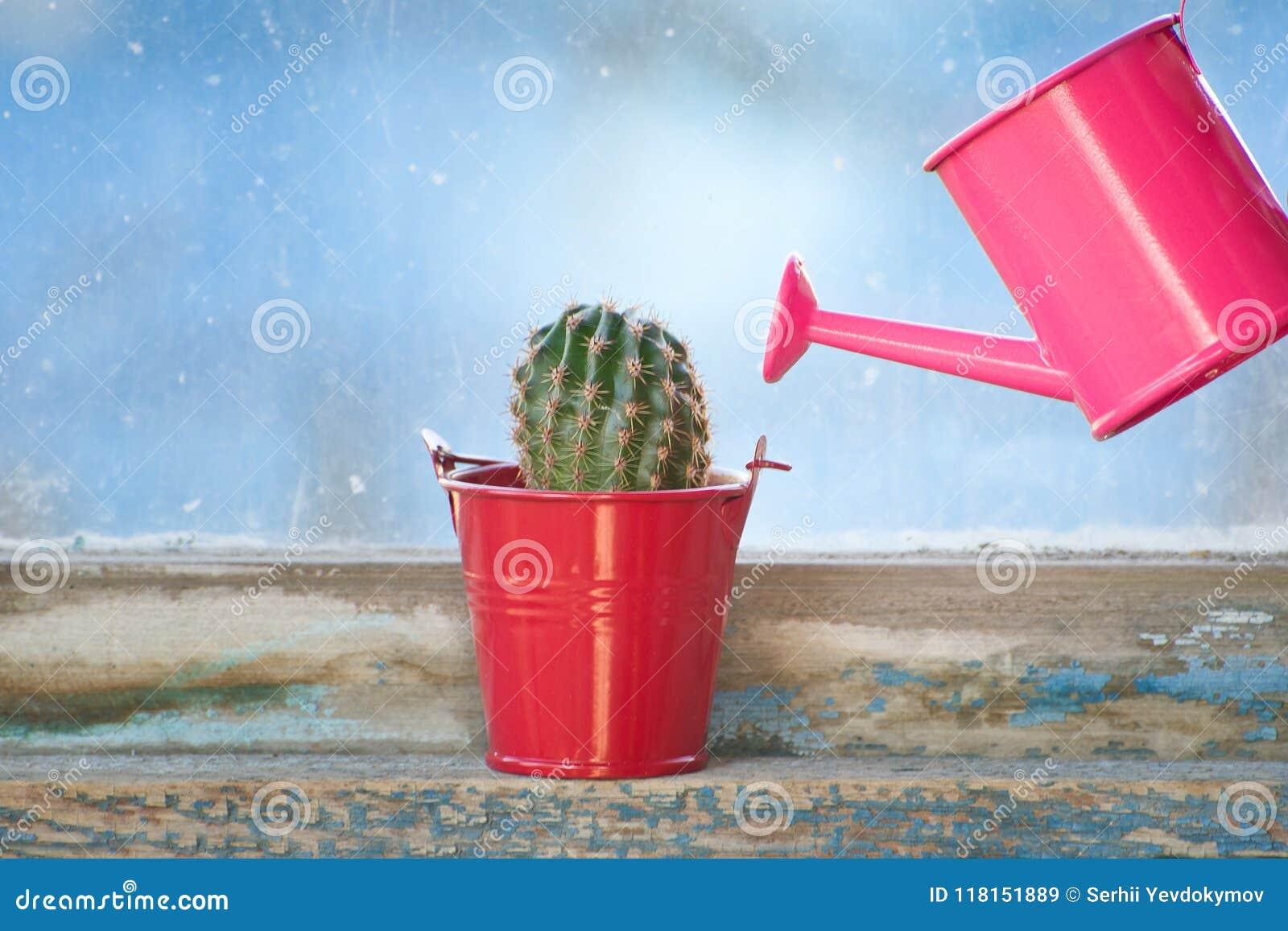 Piccoli annaffiatoio e cactus rosa sulla vecchia finestra
