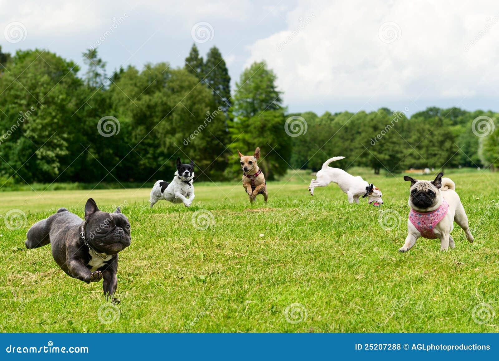 Piccoli cani nella sosta