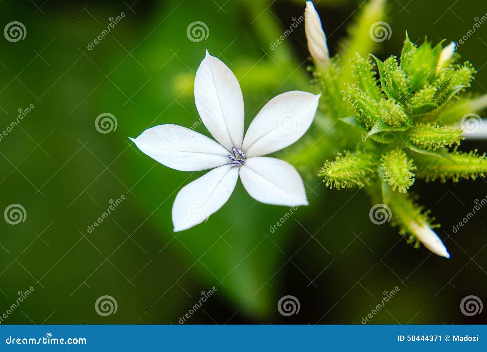 Piccoli fiori bianchi immagine stock immagine di verde for Fiori piccoli bianchi