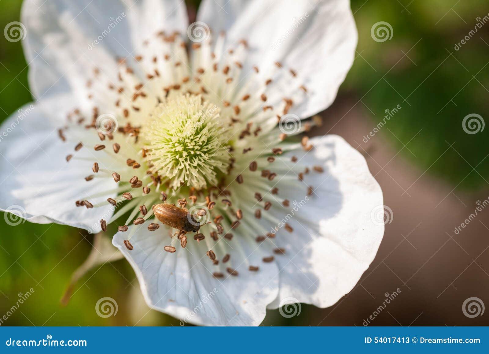 Piccoli fiori bianchi