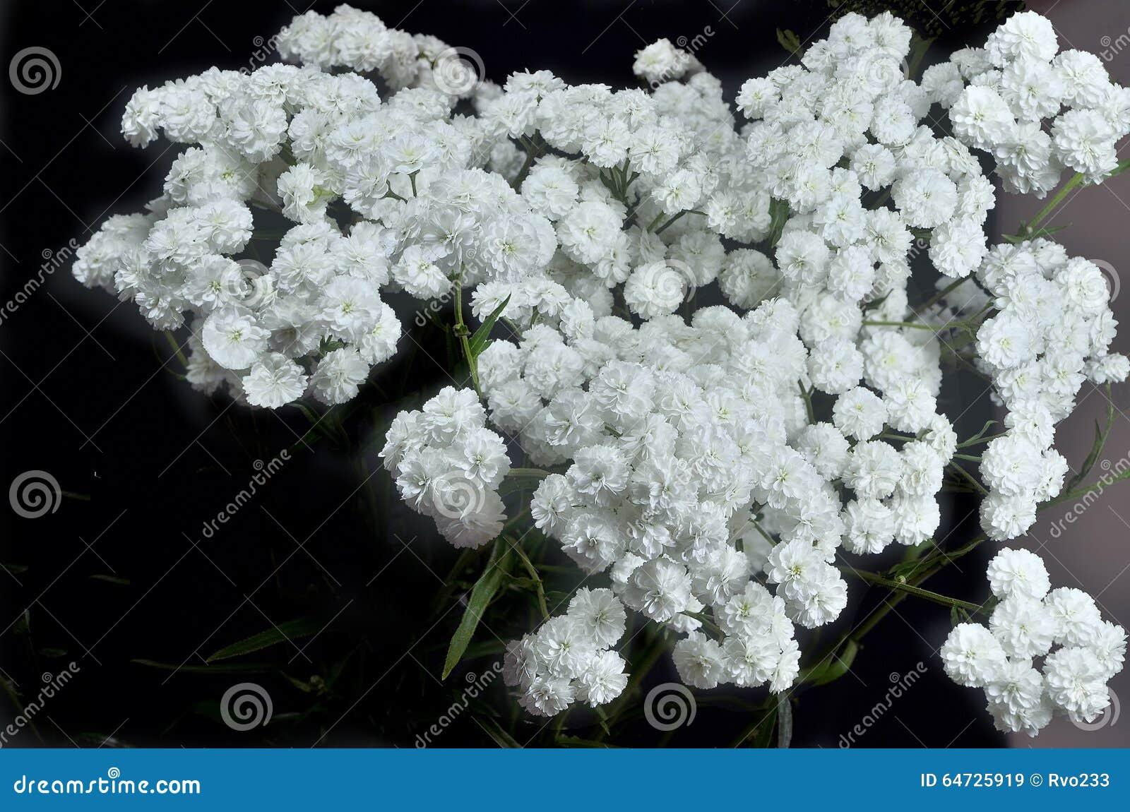 Piccoli fiori bianchi lanuginosi