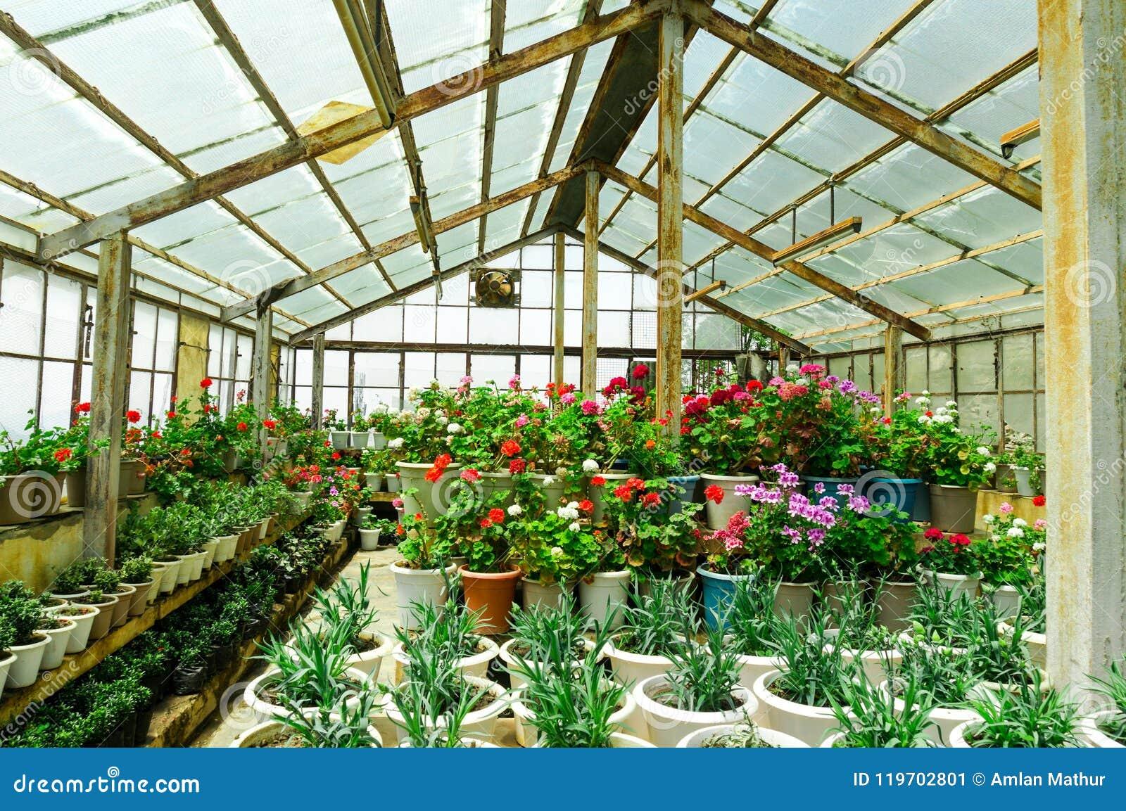 Piccole Serre Da Casa piccoli fiori crescenti caldi rurali della serra della casa