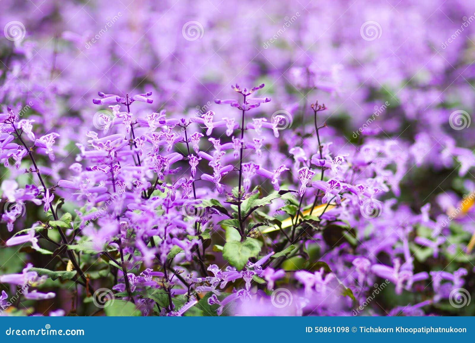 Piccoli fiori tropicali viola e bianchi fotografia stock for Fiori piccoli bianchi