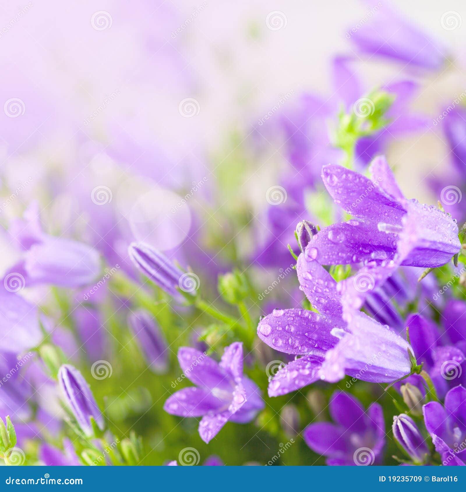 Piccoli Fiori Viola.Piccoli Fiori Viola Del Campanula Immagine Stock Immagine Di