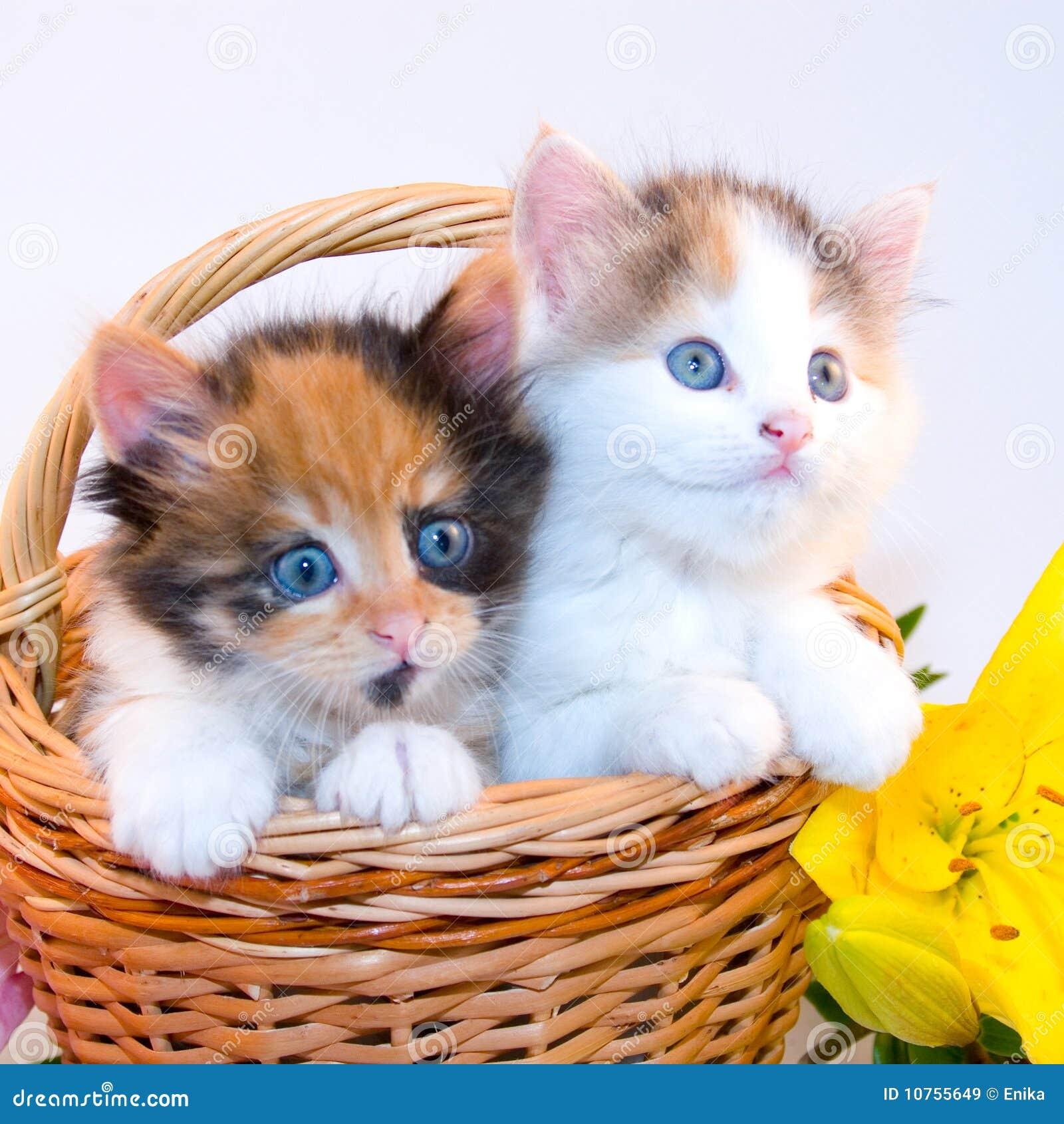 Eccezionale Piccoli gattini immagine stock. Immagine di veterinario - 10755649 KJ79