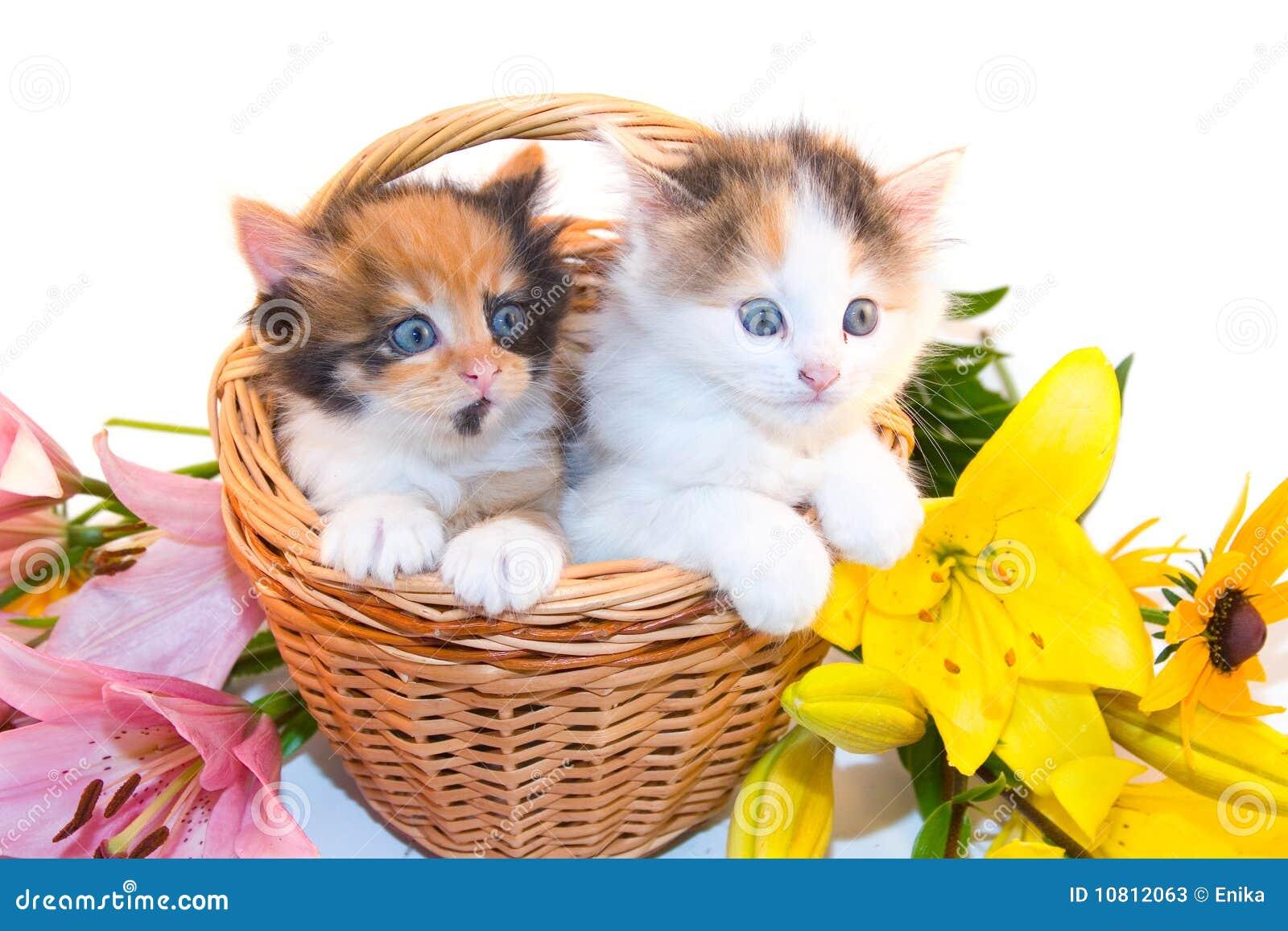 Piccoli gattini in cestino e fiori immagine stock for I gattini piccoli