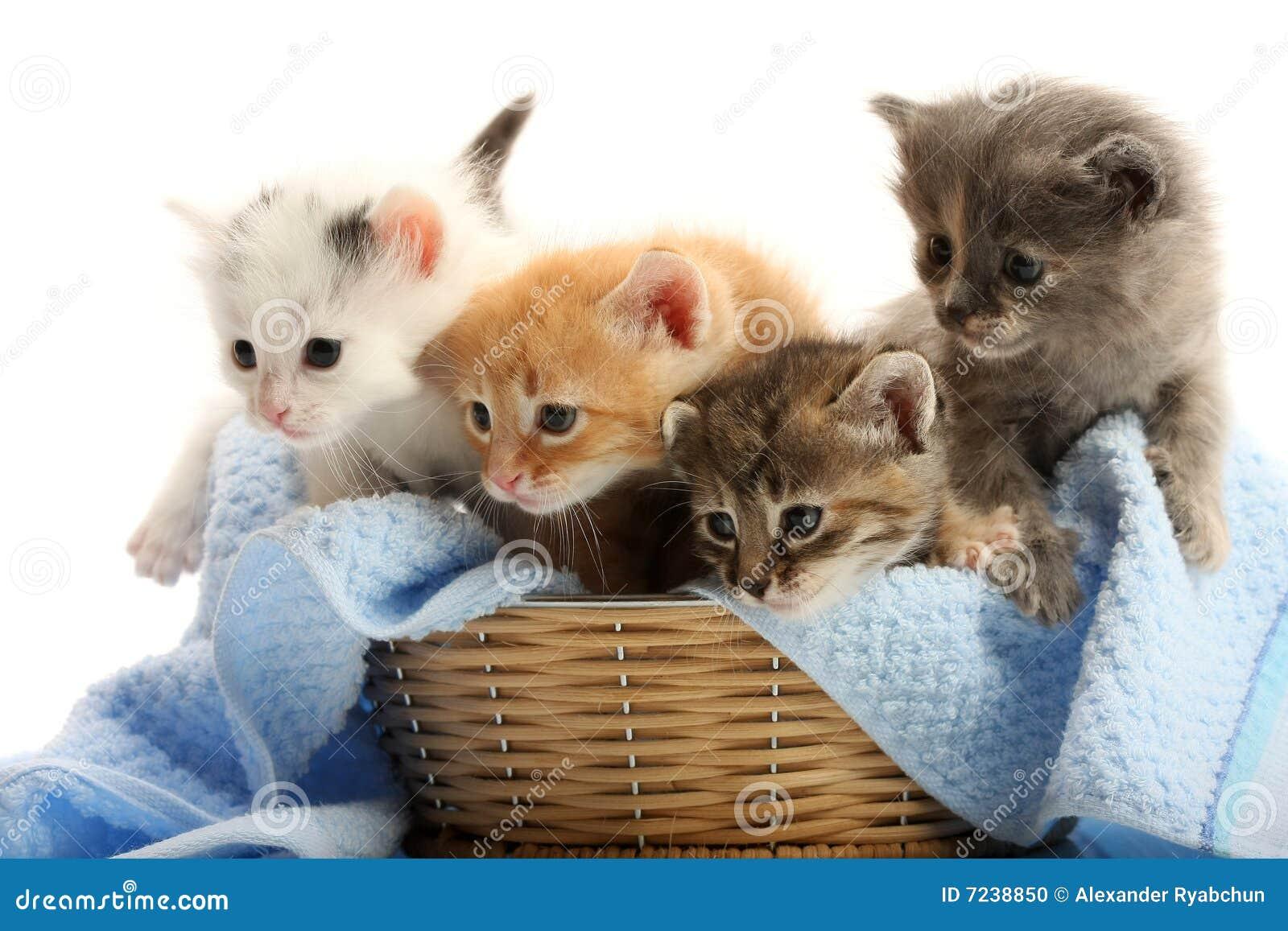 Piccoli gattini nel cestino della paglia fotografia stock for I gattini piccoli