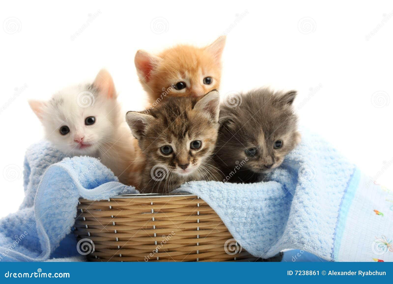Piccoli gattini nel cestino della paglia immagine stock for I gattini piccoli