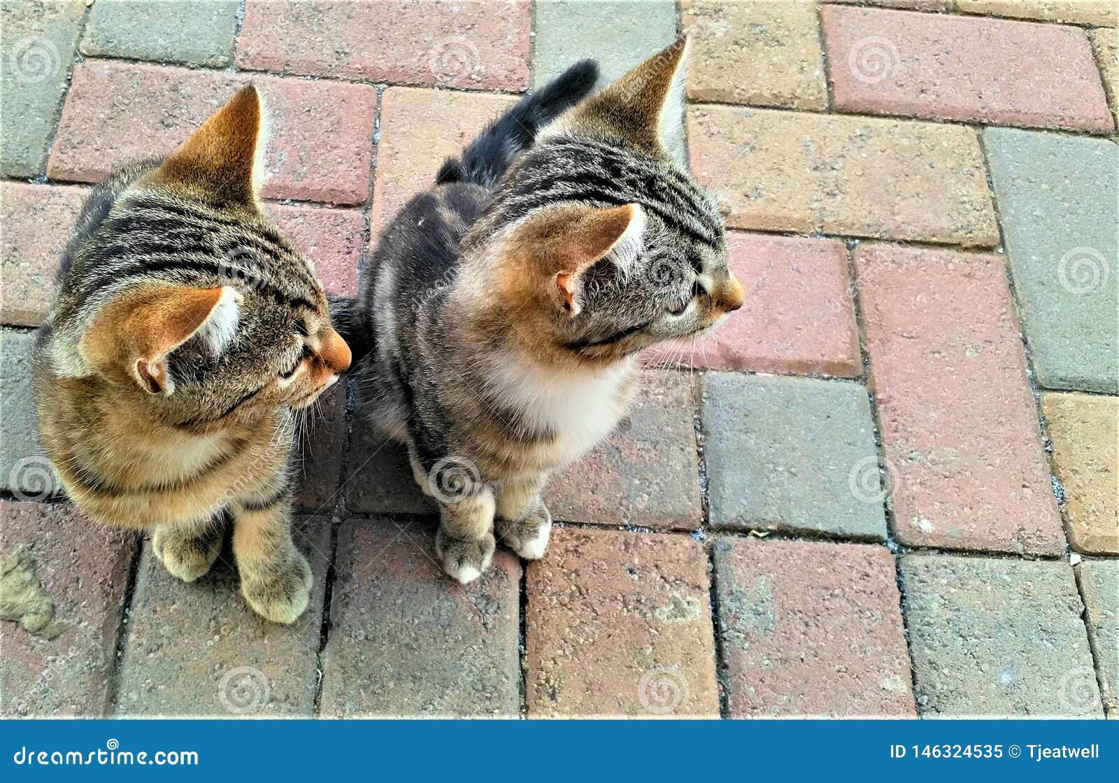 Piccoli gattini svegli che guardano in una direzione