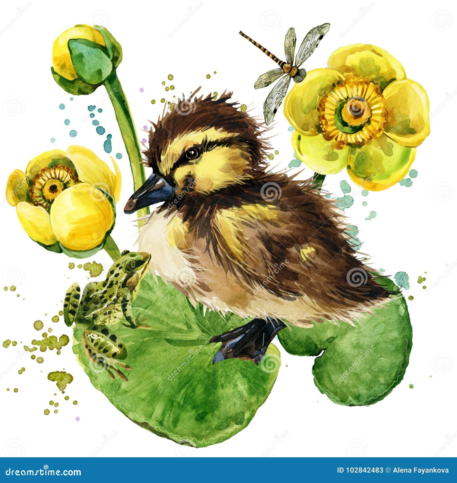 Piccolo anatroccolo sveglio fondo giallo dell acquerello della ninfea
