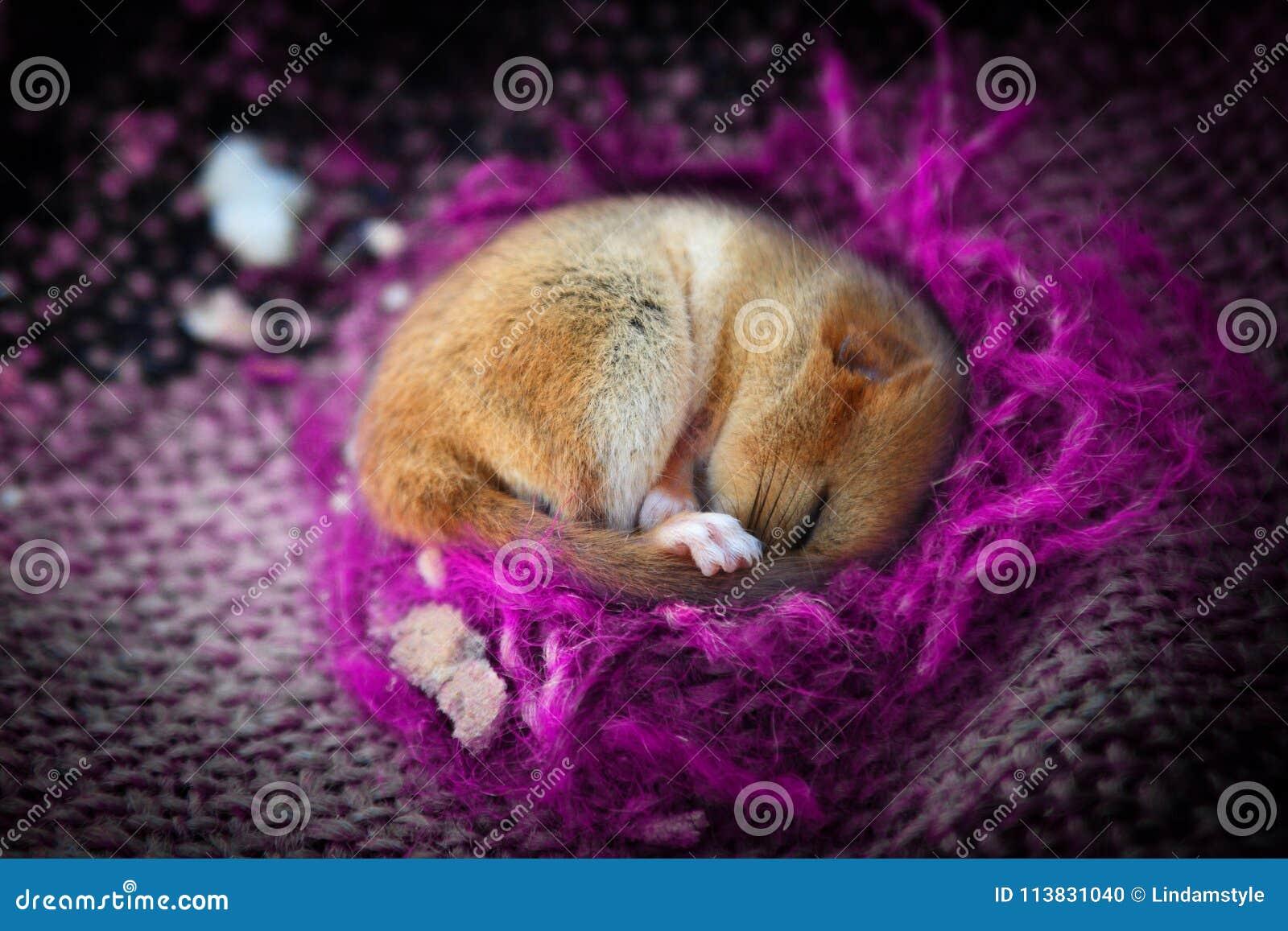Piccolo animale sveglio che dorme in coperta viola