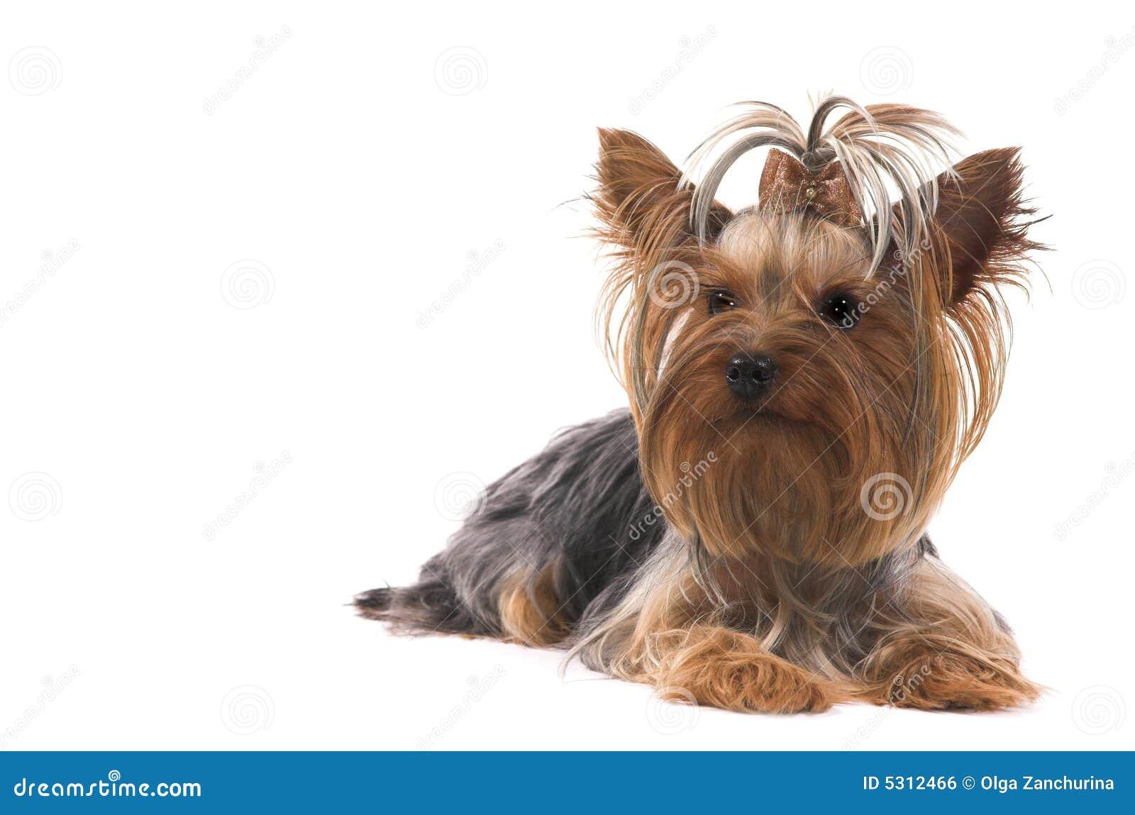 Download Piccolo cane fotografia stock. Immagine di copia, vitalità - 5312466