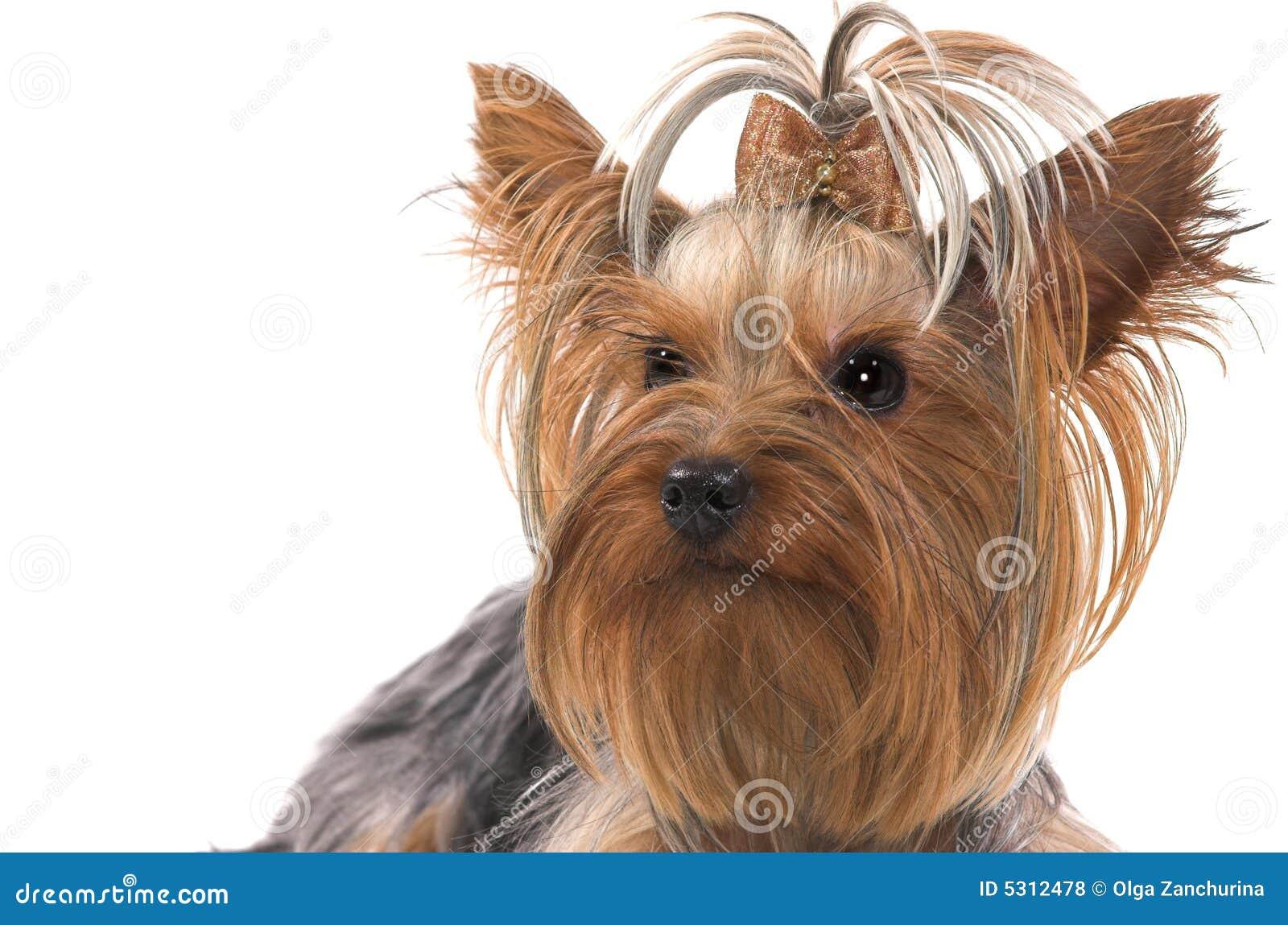 Download Piccolo cane fotografia stock. Immagine di vitalità, pets - 5312478