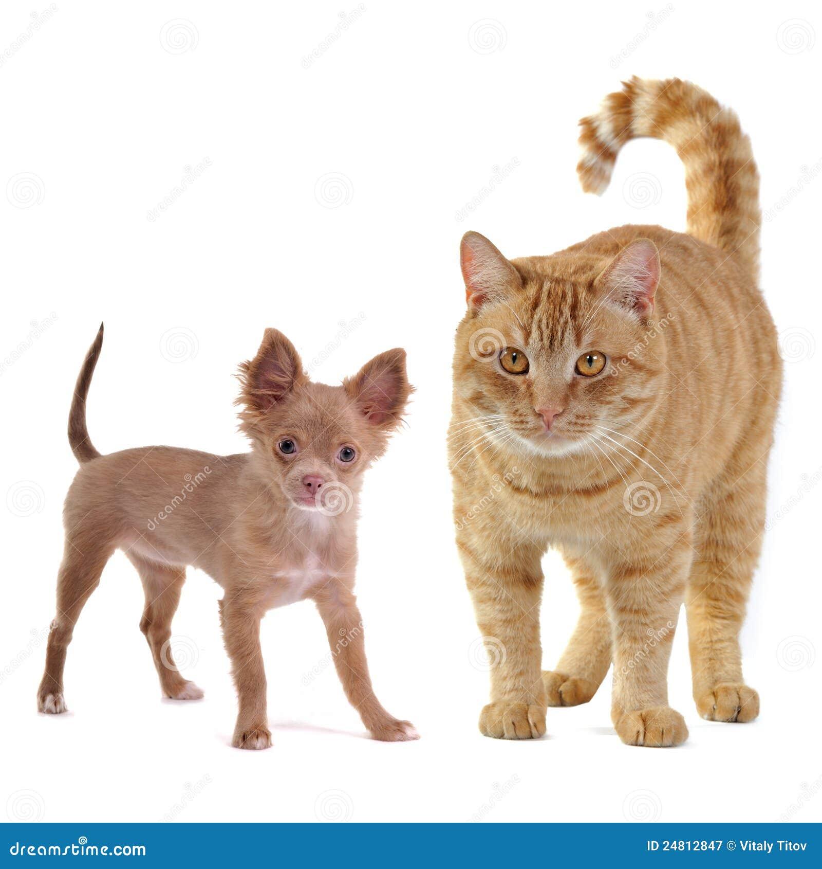 Piccolo cane e grande gatto