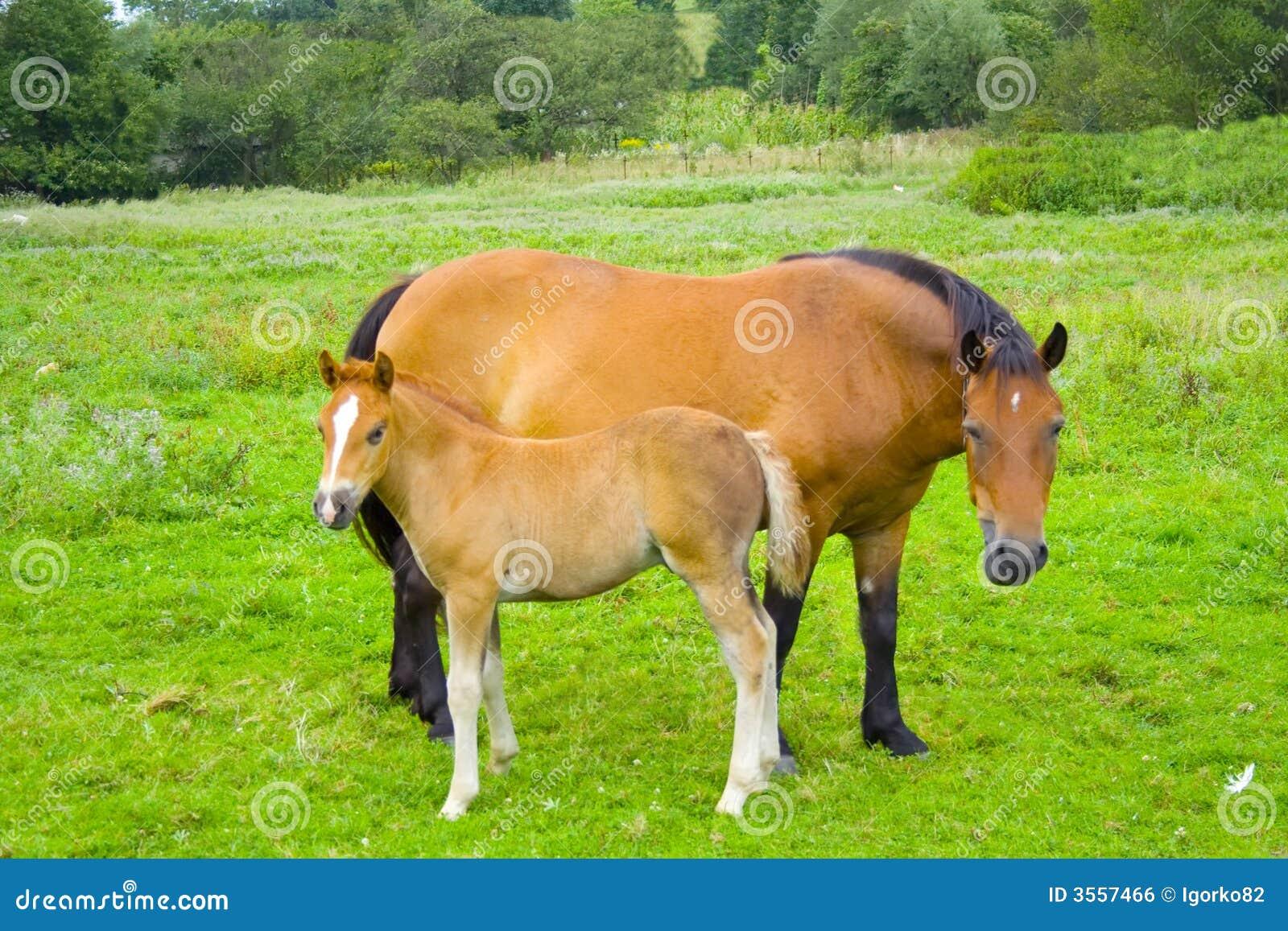 Piccolo cavallo con la madre