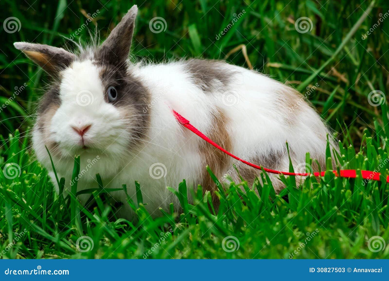 Piccolo coniglietto sveglio sul guinzaglio