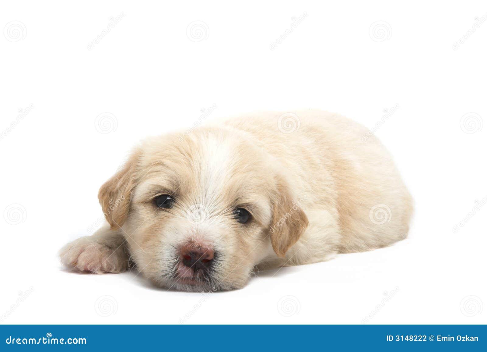 Piccolo cucciolo