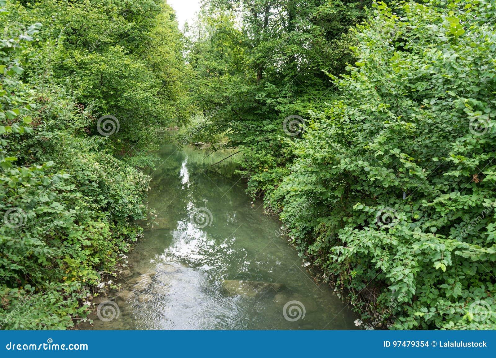 Piccolo fiume che passa foresta