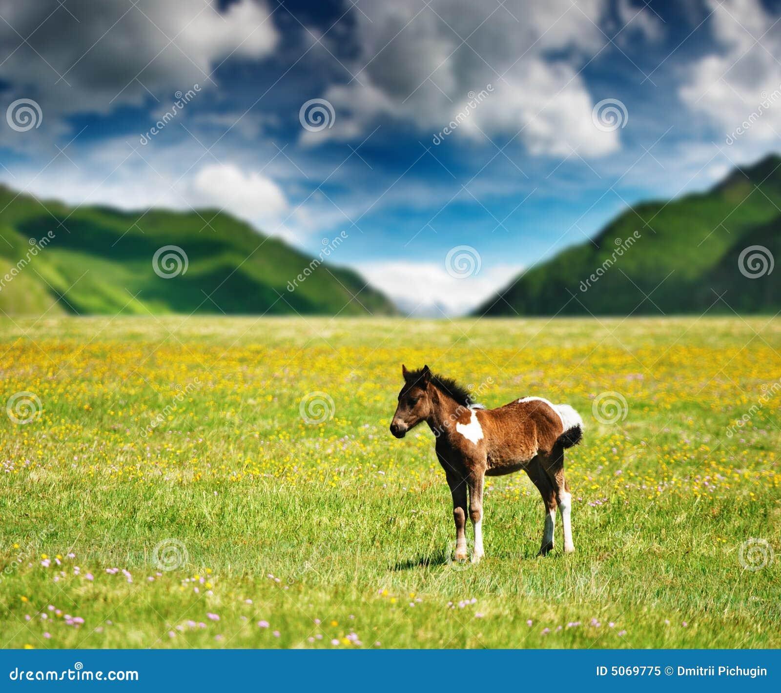 Piccolo foal
