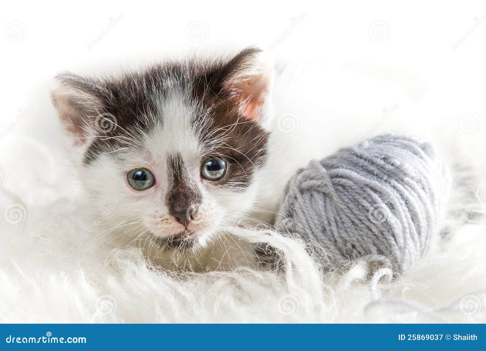 Piccolo gattino del primo piano con la matassa immagine for Piani principali del primo piano