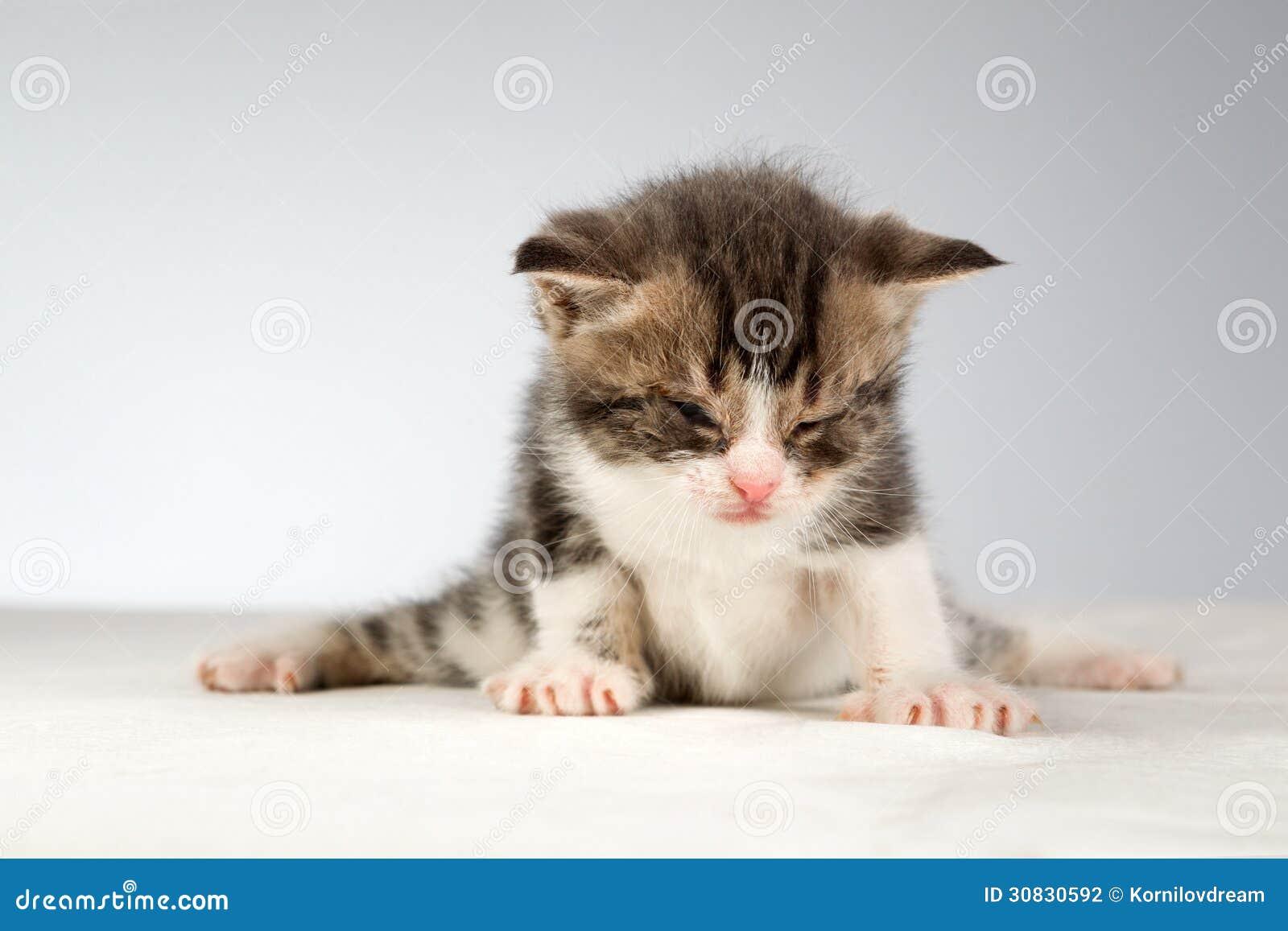 Piccolo gattino divertente