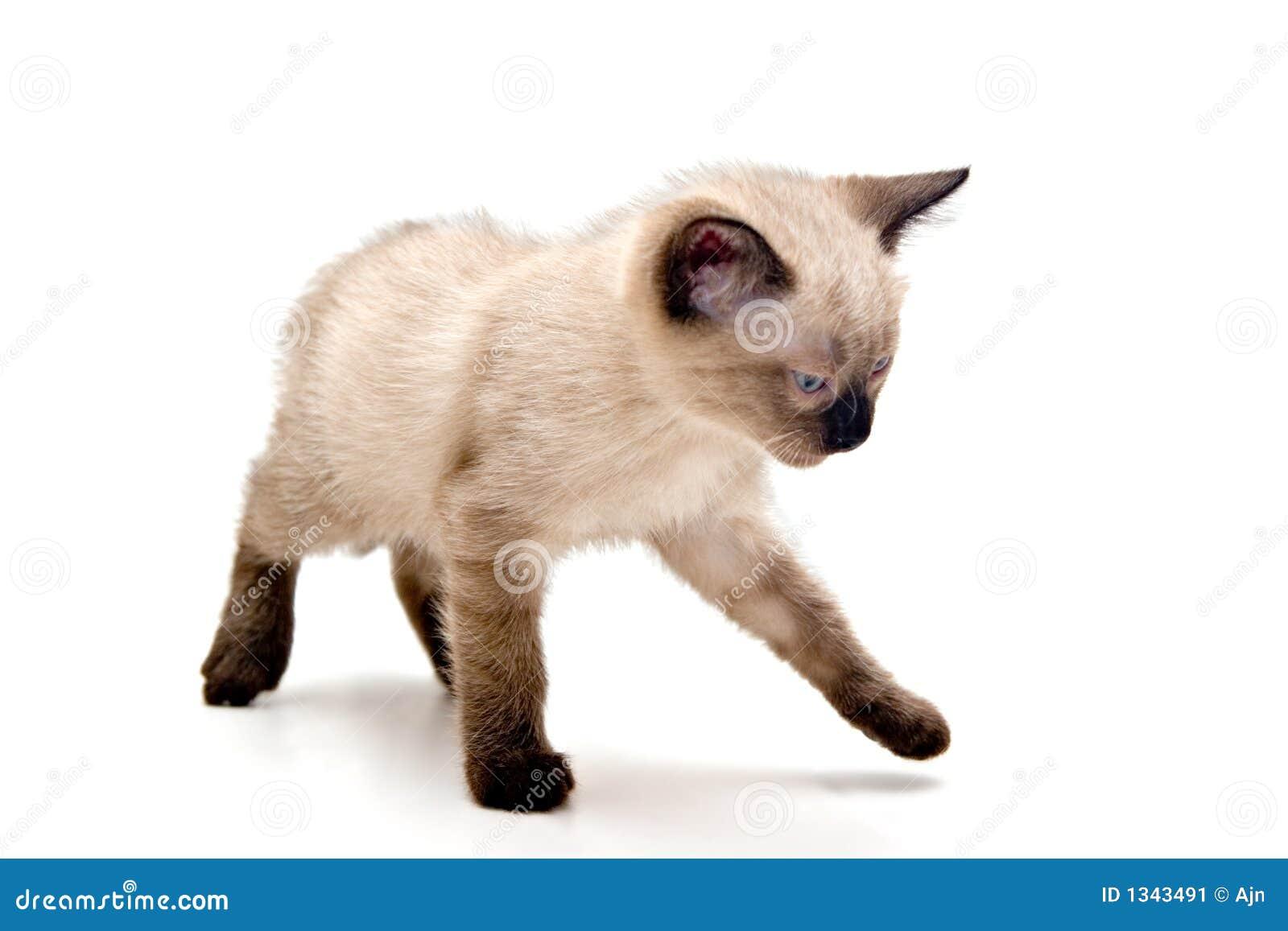 Piccolo gattino infastidetto