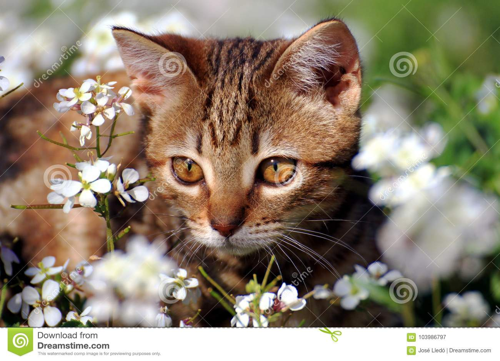 Piccolo gattino nel giardino