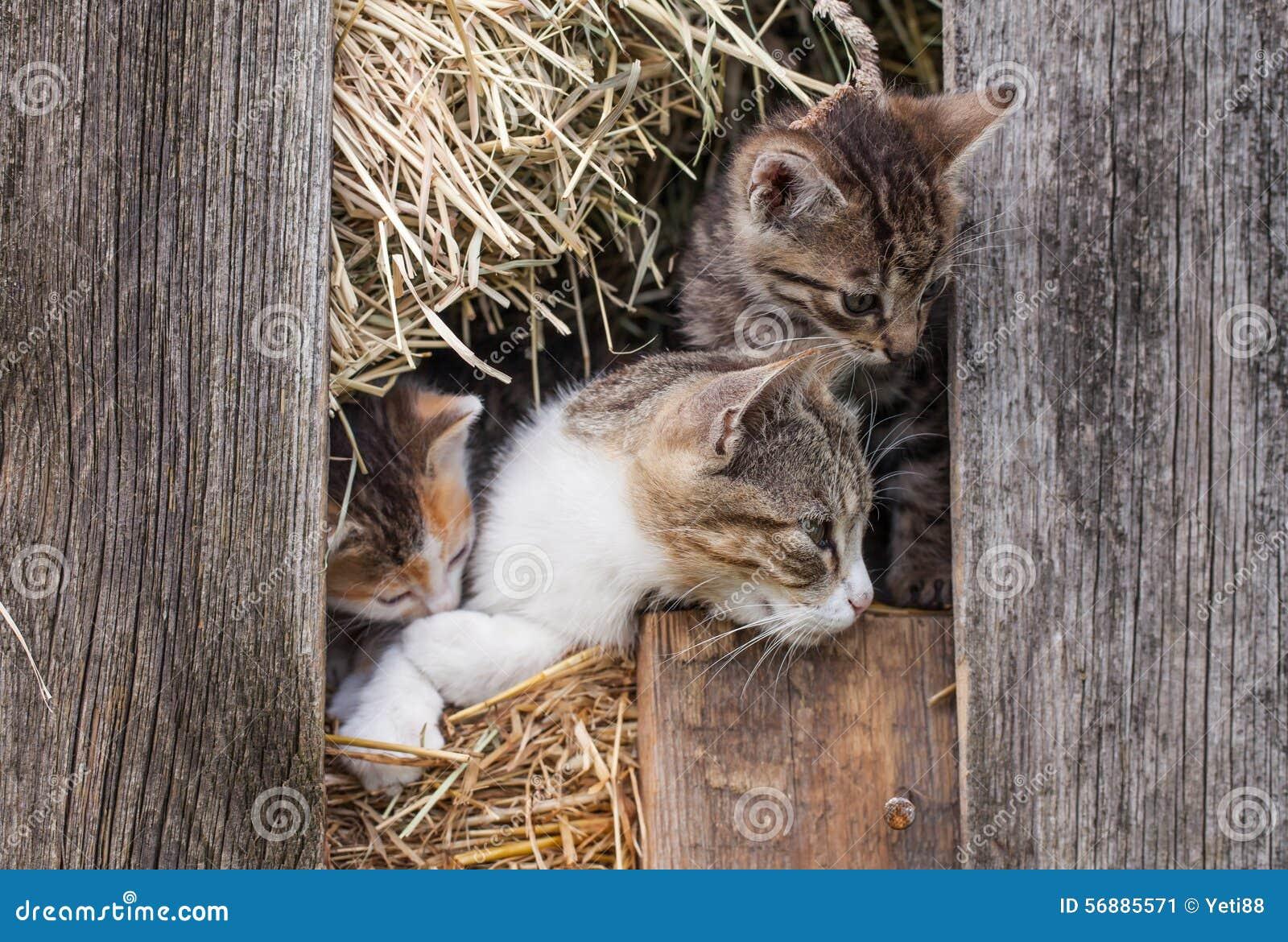 Piccolo gattino nel granaio