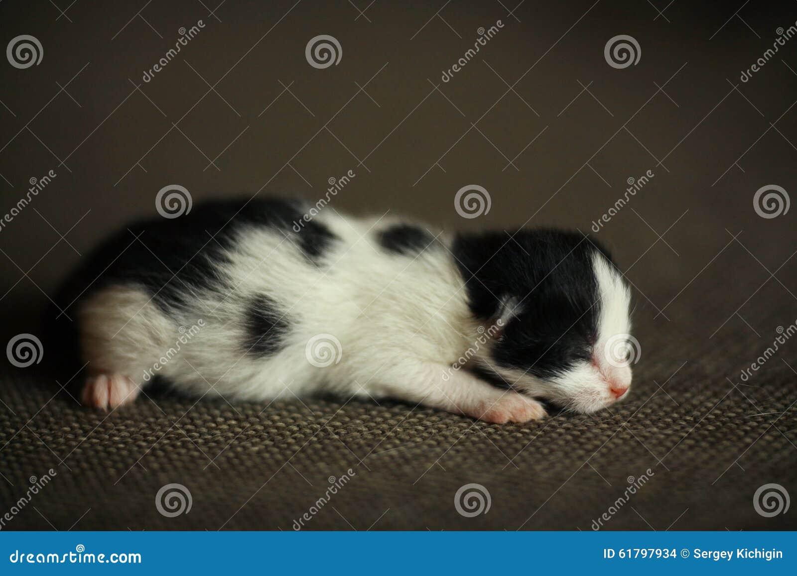 Piccolo gattino recentemente sopportato