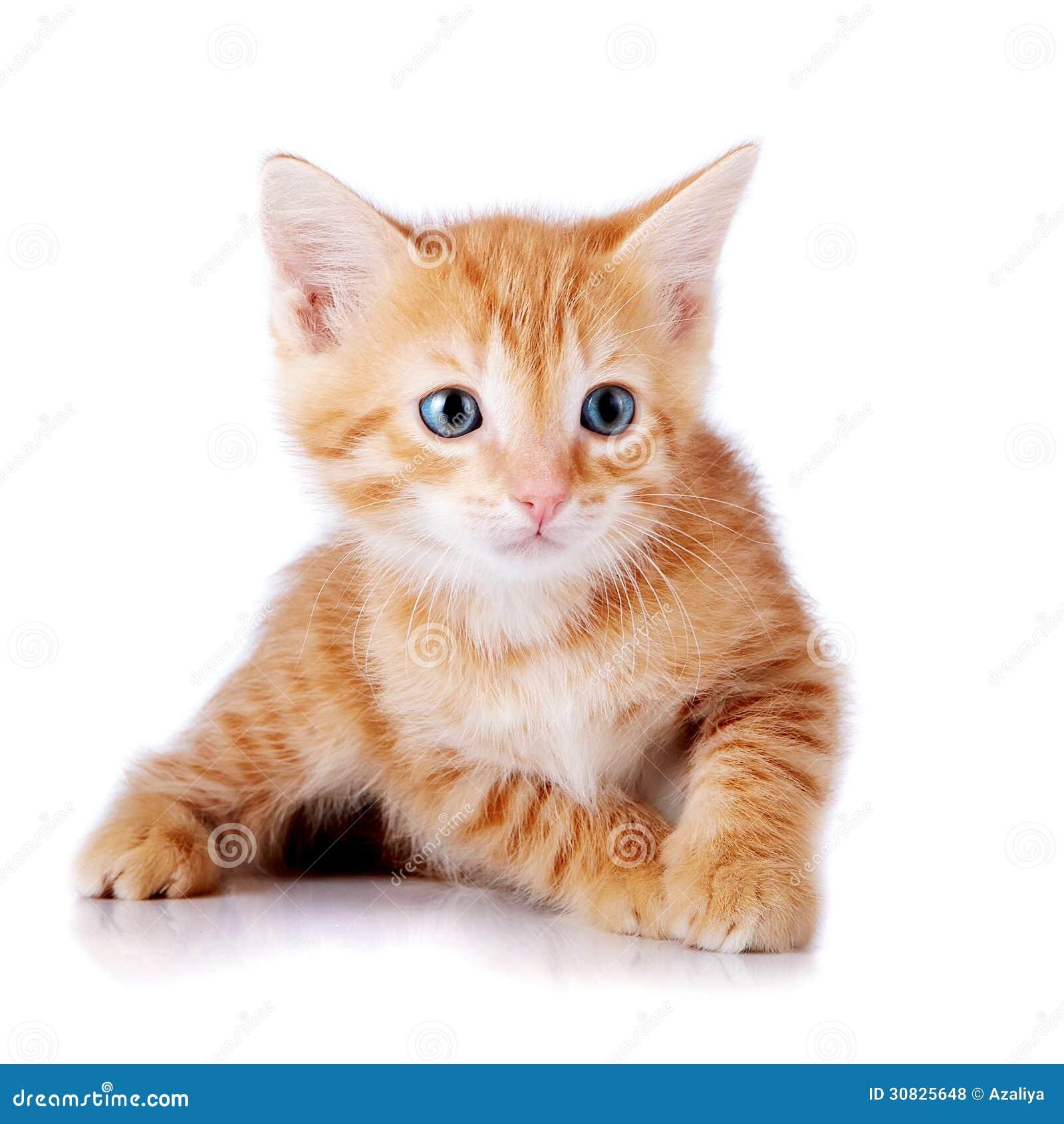 Piccolo gattino rosso.