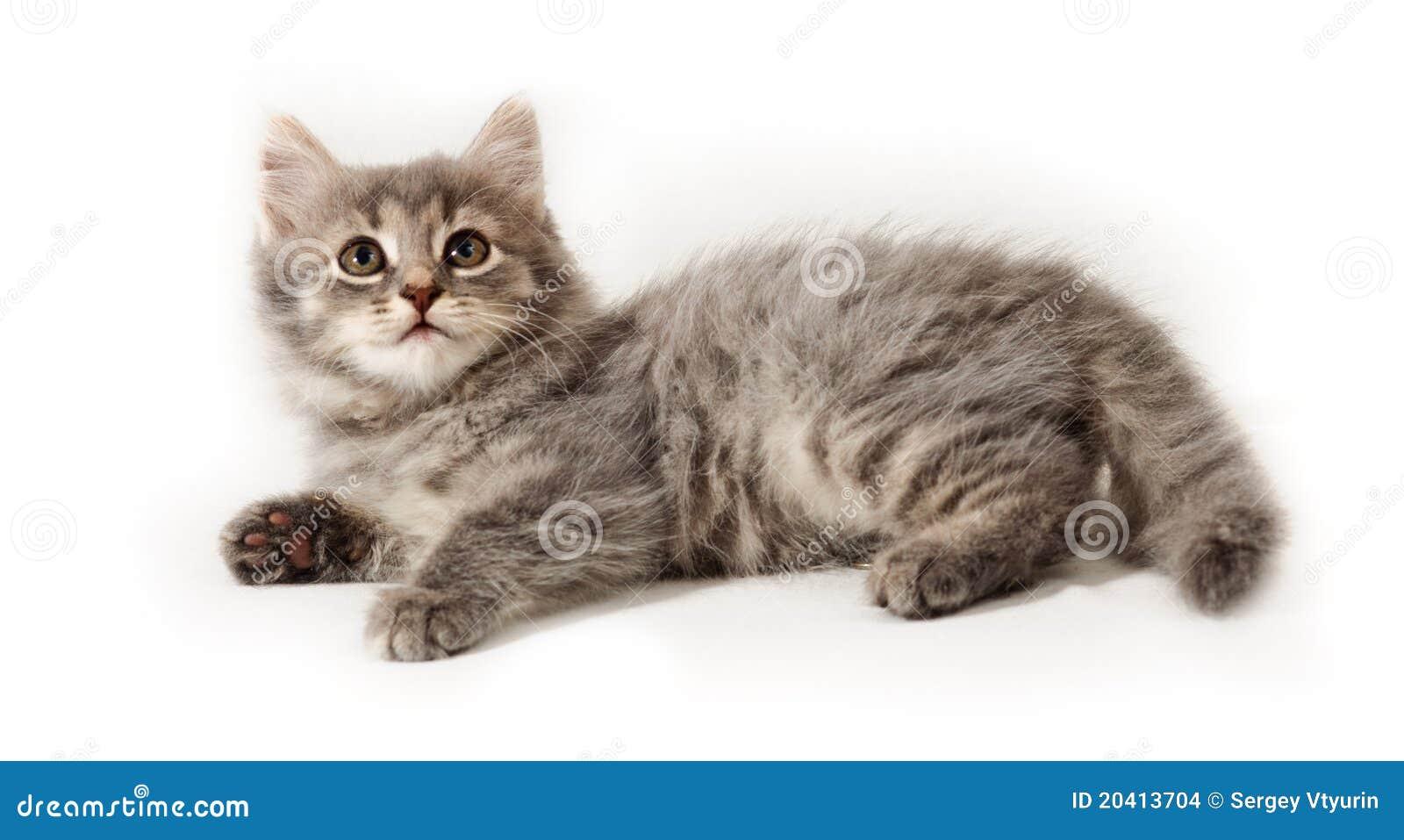 Piccolo gattino su bianco