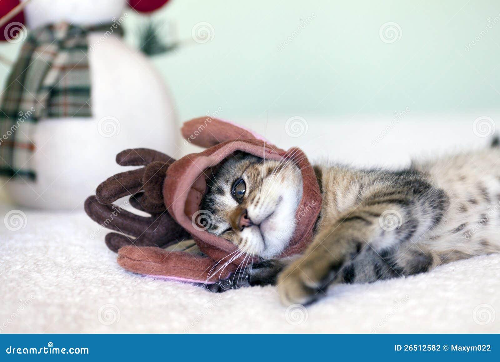Piccolo gatto
