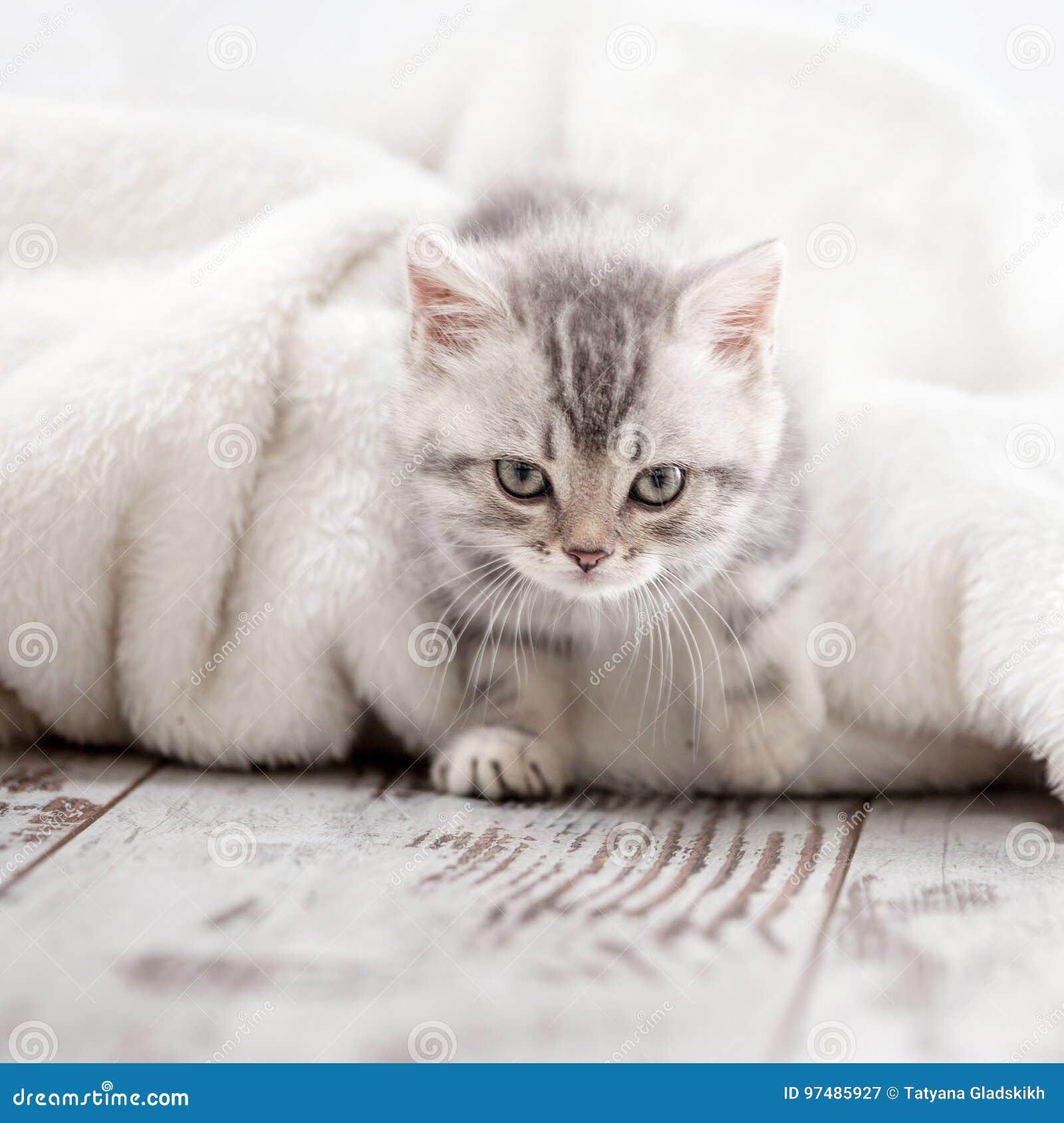 Piccolo gatto a casa