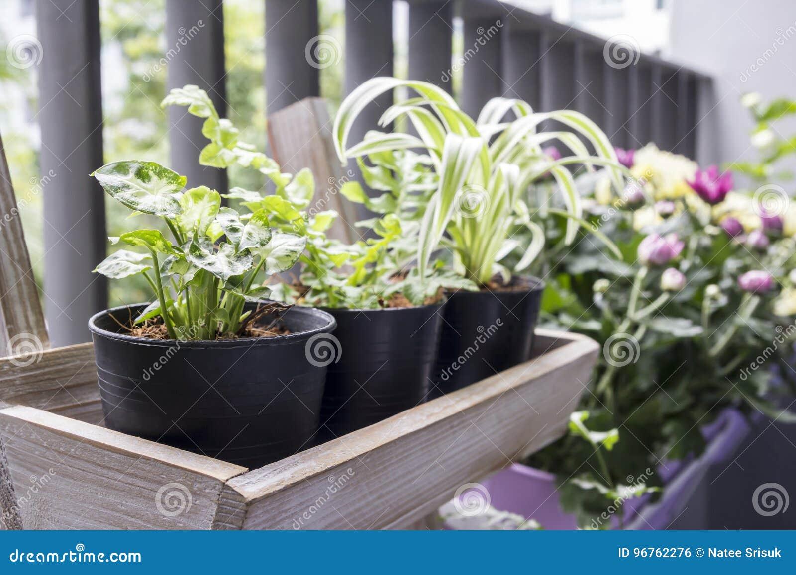 Piccolo Giardino Sul Balcone : Piccolo giardino sul balcone fotografia stock immagine di verde