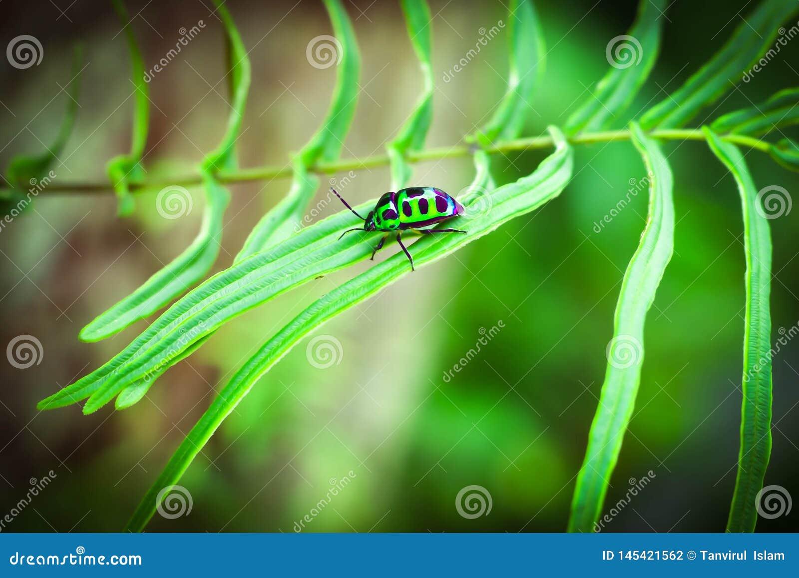 Piccolo insetto verde di un albero
