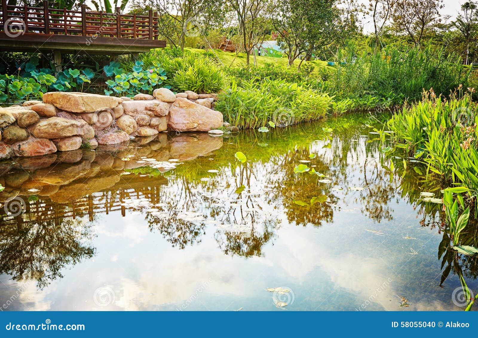 Piccolo paesaggio dello stagno del giardino fotografia for Stagno giardino